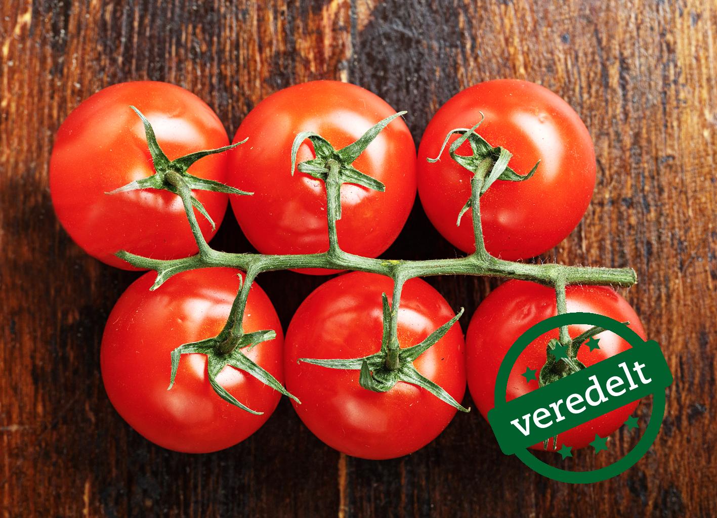 Sechs leuchtend rote 'Rougella'-Bio-Tomaten hängen in einer Traube am Stiel